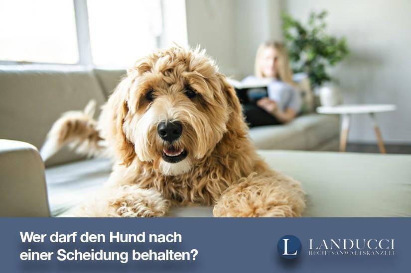 Wer darf den Hund nach einer Scheidung behalten?
